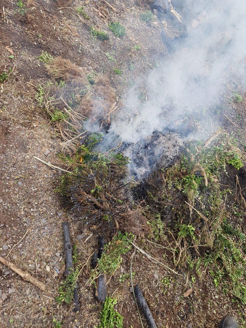 Brandeinsatz vom 06.06.2019  |  (C) Freiwillige Feuerwehr Niederlosheim (2019)